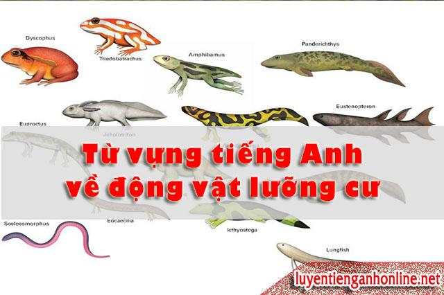 Học từ vựng tiếng Anh theo chủ đề động vật